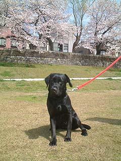 2004/春 犀川 さくら ミント
