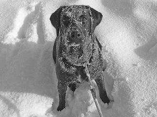 雪まみれミーシャ