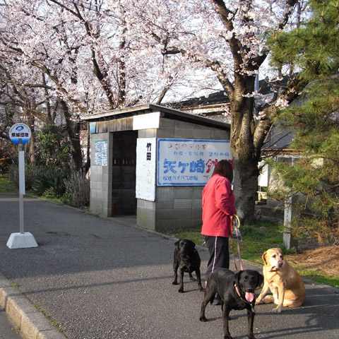 2008年春蕪城通り散歩
