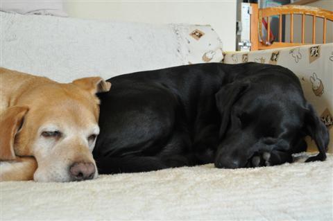 左がゆきちゃん、右の黒いのはミーシャ