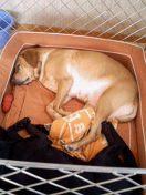 2004/3/19 AM ベットの幅にすっぽりはまってお昼寝中。